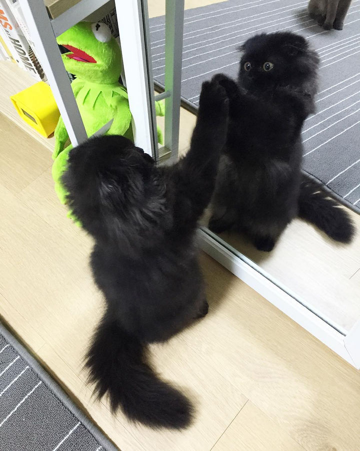 Gimo has a great time with nearly everything does. He knows he is cute and loves admiring himself in the mirror.