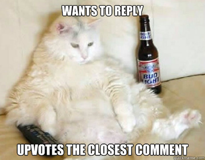 """23 Amusingly Lazy Cats - """"I could use another beer."""""""