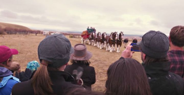 Budweiser Clydesdales Help Purina Deliver Surprise to Far View Horse Rescue.