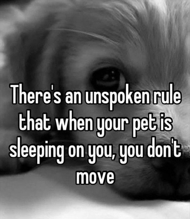 "37 Funny Animal Memes - ""There's an unspoken rule that when your pet is sleeping on you, you don't move."""