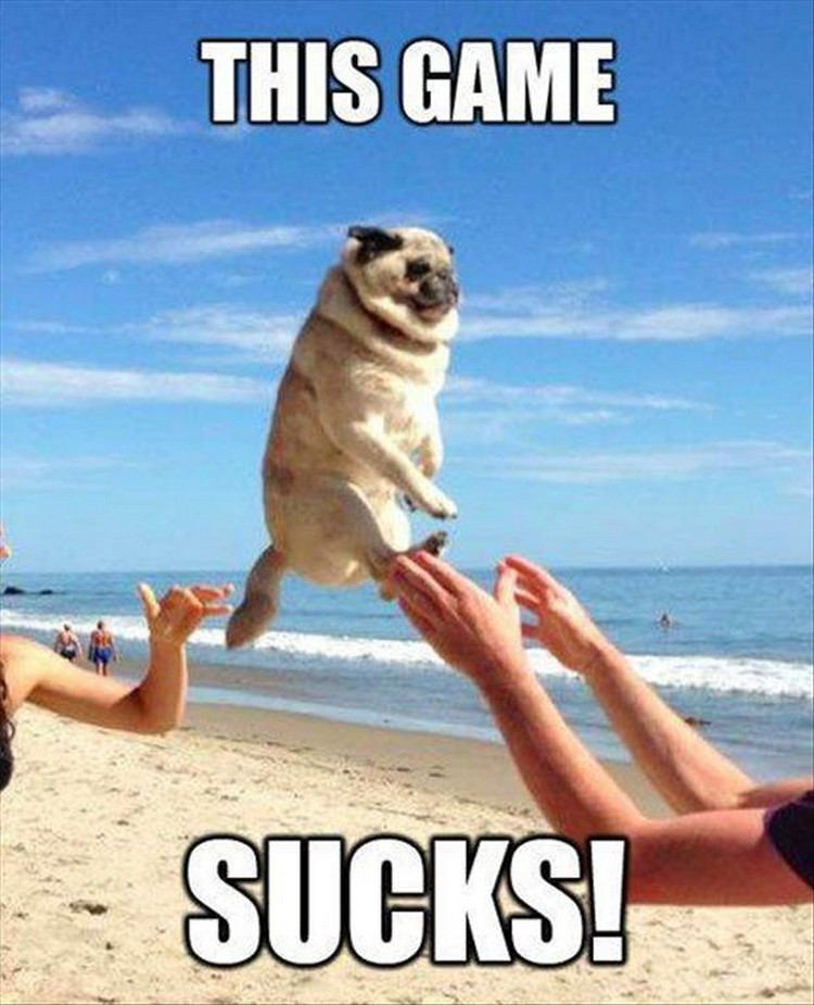 "37 Funny Animal Memes - ""This game sucks!"""