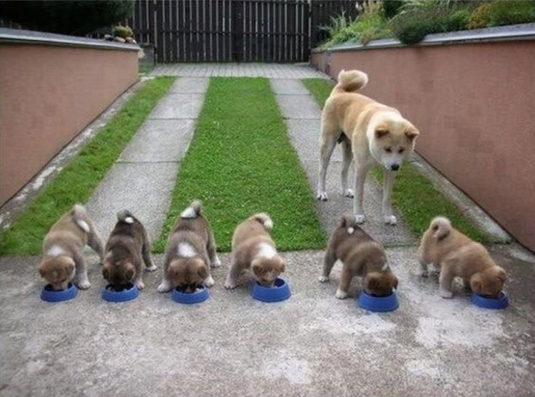 """21 Proud Mommy Dogs - That's a lot of """"doge"""" bowls!"""