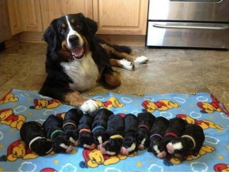21 Proud Mommy Dogs - So adorable.