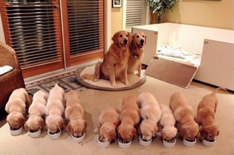 21 Proud Mommy Dogs - Loving parents so proud of their little puppies.