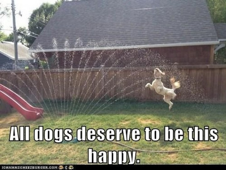 """27 Funny Animal Memes - """"All dogs deserve to be this happy."""""""