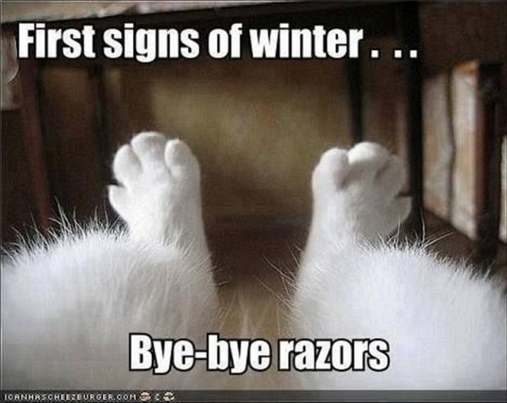 """27 Funny Animal Memes - """"First signs of winter. Bye-bye razors."""""""