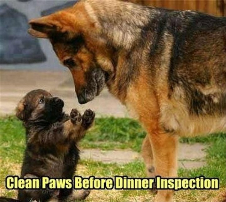 """27 Funny Animal Memes - """"Clean paws before dinner inspection."""""""