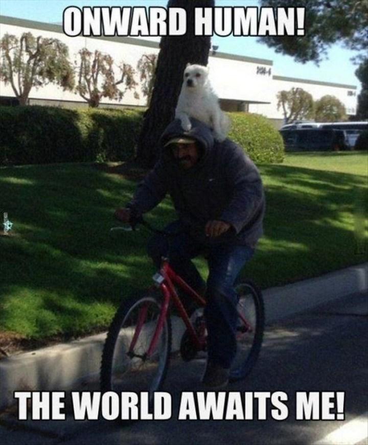 "27 Funny Animal Memes - ""Onward human! The world awaits me!"""