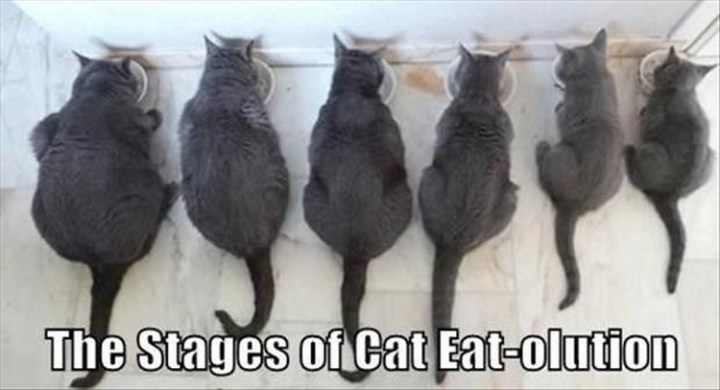 """27 Funny Animal Memes - """"The stages of cat eat-olution."""""""