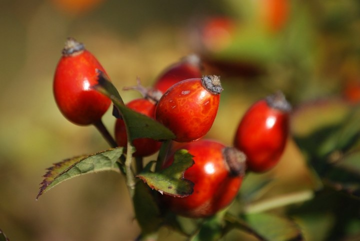 13 Natural Skin Care Products - Rosehip oil.