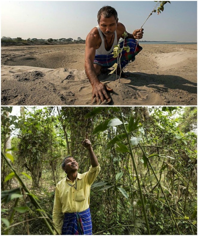 Environmentalist Jadav Payeng began planting trees at the age of 16. 37 years later and many tree plantings later, he has reaped a forest that exceeds 550hectares. His forest is home to Bengal tigers, rhinos, deer, rabbits, and other animals.
