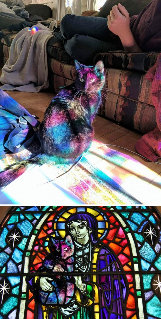 11 Epic Photoshop Battles - This cat bathed in light from a stained glass window.