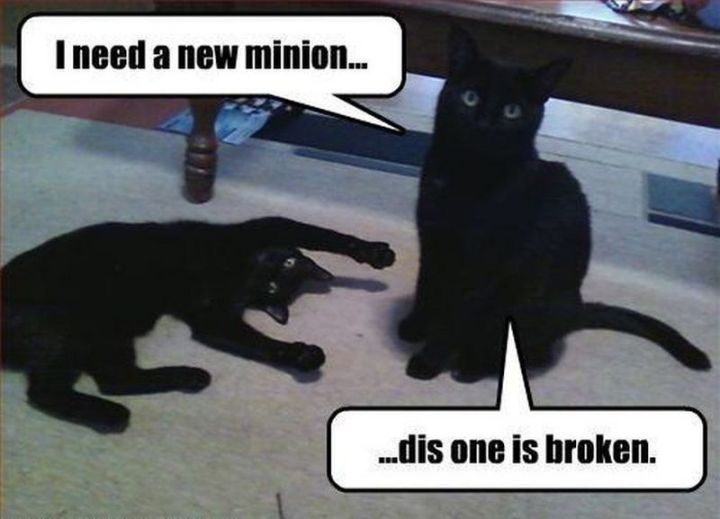 "55 Funny Cat Memes - ""I need a new minion...dis one is broken."""