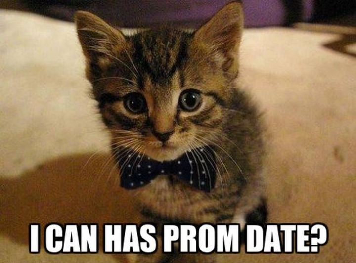 "55 Funny Cat Memes - ""I can has prom date?"""