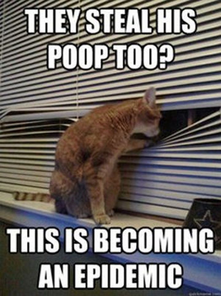 "55 Funny Cat Memes - ""They steal his poop too? This is becoming an epidemic."""