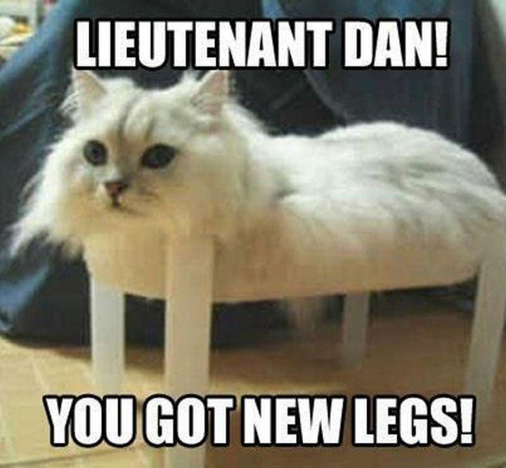 """55 Funny Cat Memes - """"Lieutenant Dan! You got new legs!"""""""