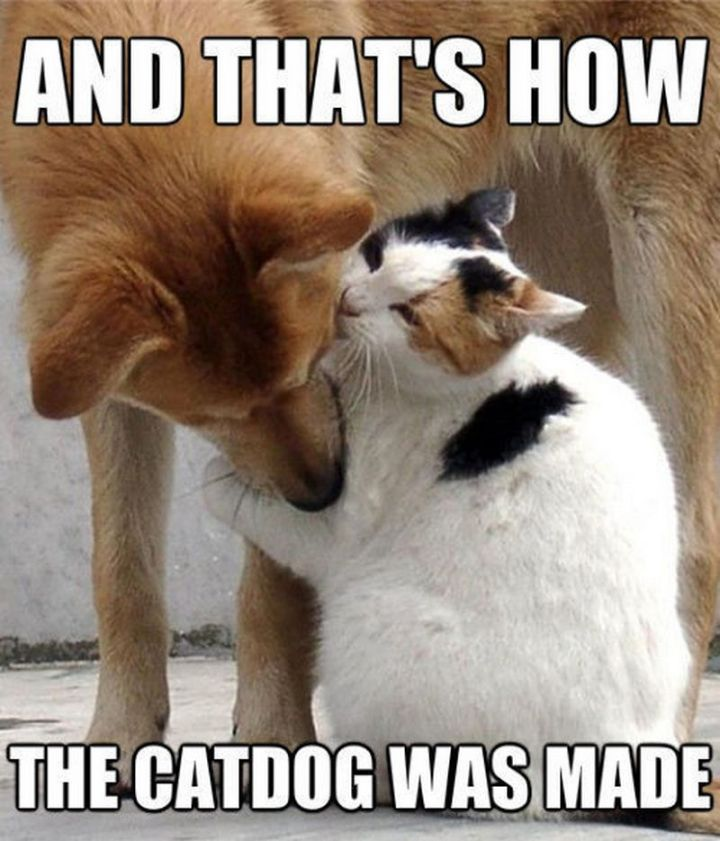 "55 Funny Cat Memes - ""And that's how the catdog was made."""