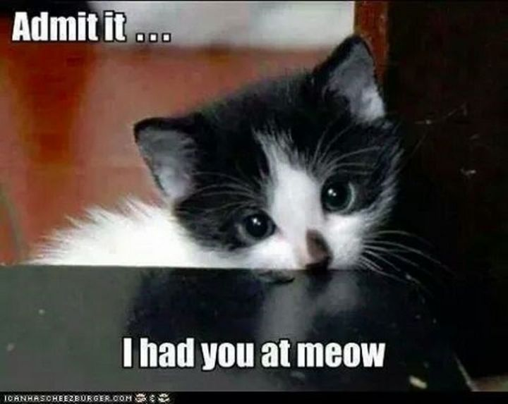 "55 Funny Cat Memes - ""Admit it, I had you at meow."""