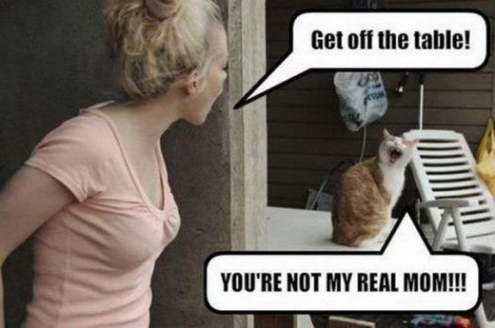 "55 Funny Cat Memes - ""Get off the table! You're not my real mom!!!"""