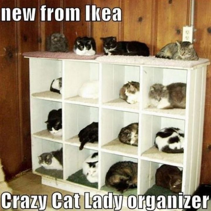 "55 Funny Cat Memes - ""New from IKEA. Crazy Cat Lady organizer."""