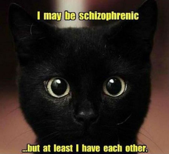 "55 Funny Cat Memes - ""I may be schizophrenic...but at least I have each other."""