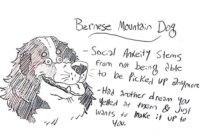 Funny Guide to Dog Breeds - Bernese Mountain Dog.
