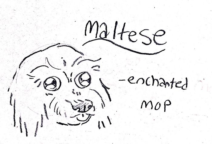 Funny Guide to Dog Breeds - Maltese.