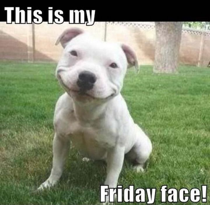 """27 Funny Friday Memes - """"This is my Friday face!"""""""