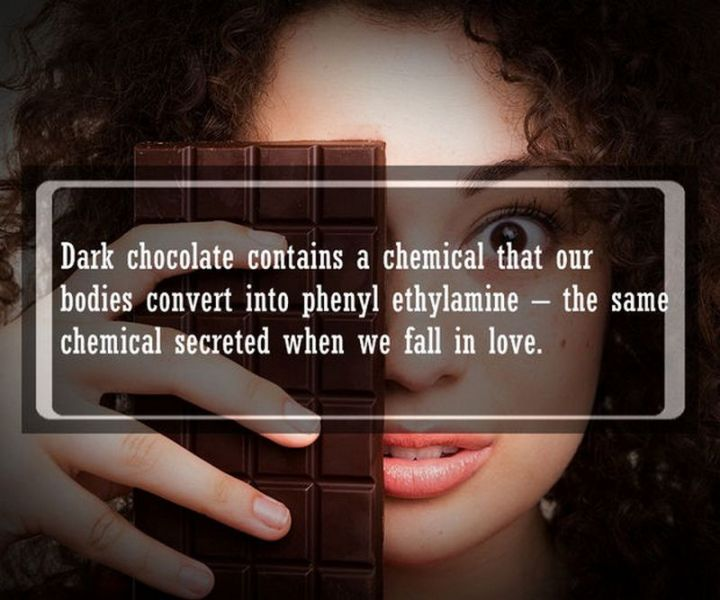 """19 Food Facts - """"Dark chocolate contains a chemical that our bodies convert into phenylethylamine - the same chemical secreted when we fall in love."""""""