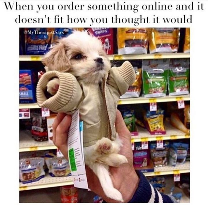 "101 best funny dog memes - ""When you order something online and it doesn't fit how you thought it would."""