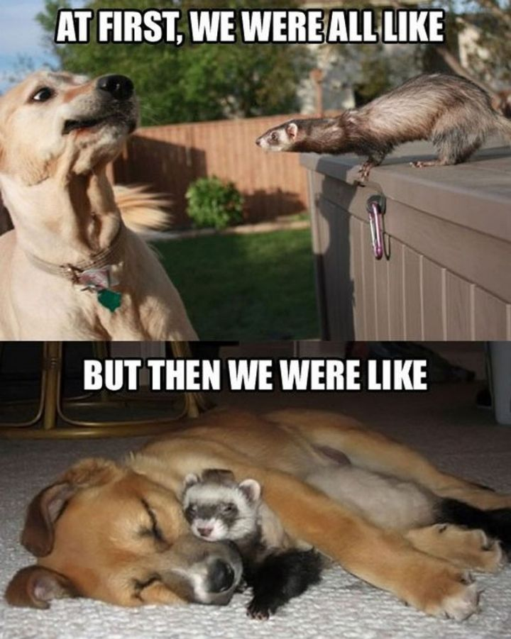 "101 best funny dog memes - ""At first, we were all like. But then we were like."""