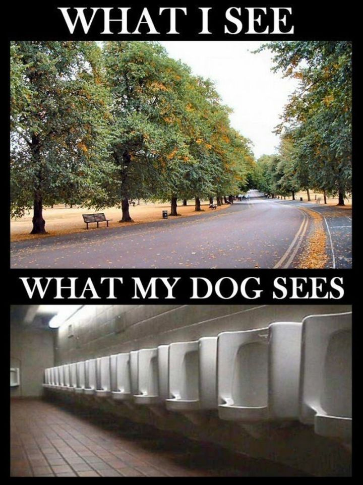 "101 best funny dog memes - ""What I see. What my dog sees."""