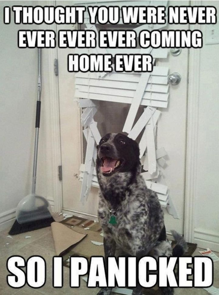 "101 best funny dog memes - ""I thought you were never ever ever ever coming home ever so I panicked."""