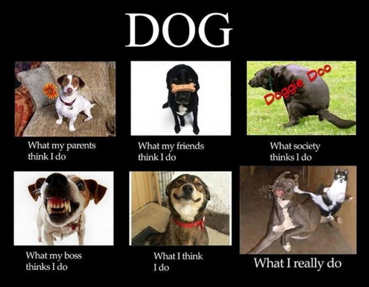 "101 best funny dog memes - ""What my parents think I do. What my friends think I do. What society thinks I do. What my boss thinks I do. What I think I do. What I really do."""