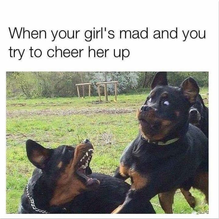 "101 best funny dog memes - ""When your girl's mad and you try to cheer her up."""