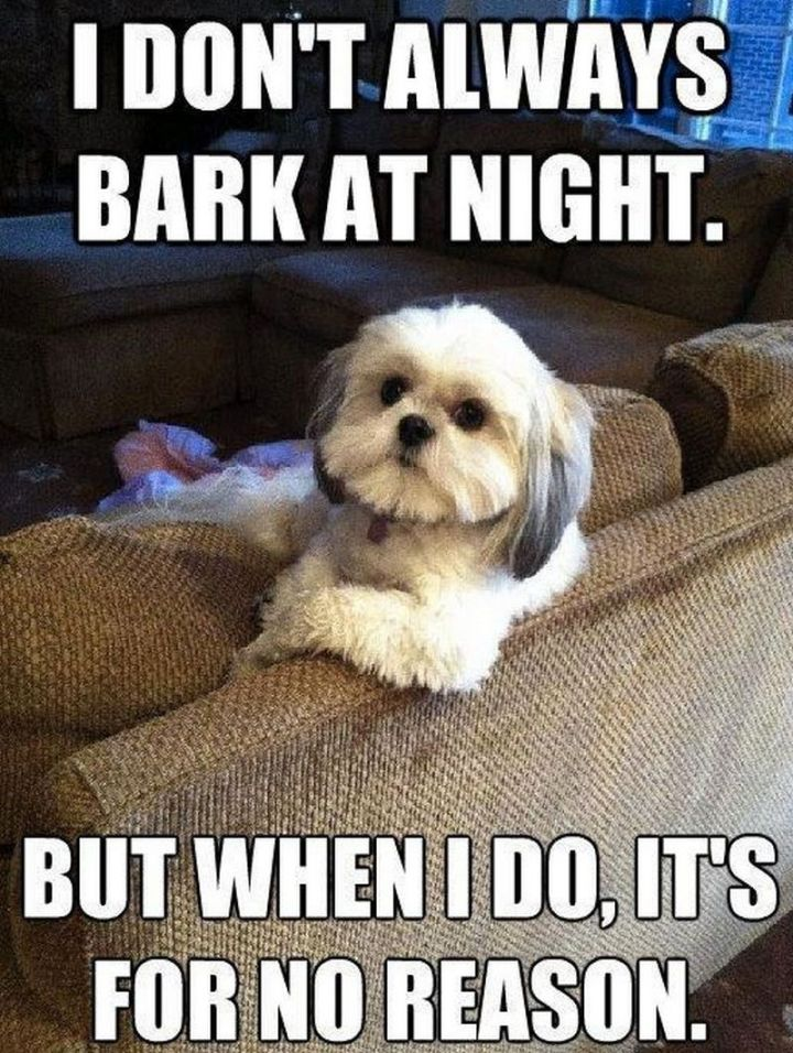 "101 best funny dog memes - ""I don't always bark at night. But when I do, it's for no reason."""