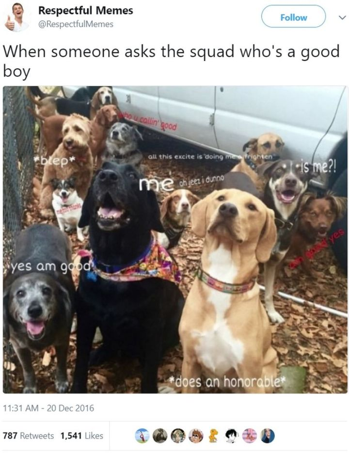 "101 best funny dog memes - ""When someone asks the squad who's a good boy."""