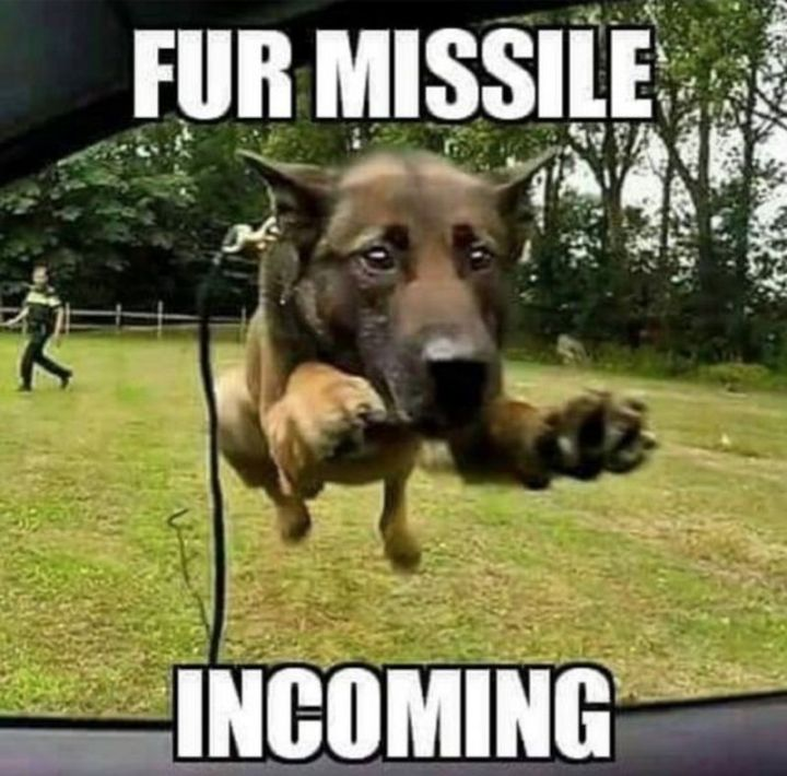 "101 best funny dog memes - ""Fur missile incoming."""