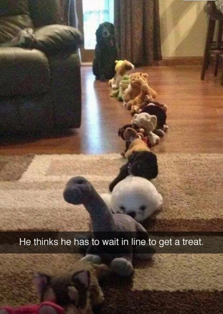 "101 best funny dog memes - ""He thinks he has to wait in line to get a treat."""