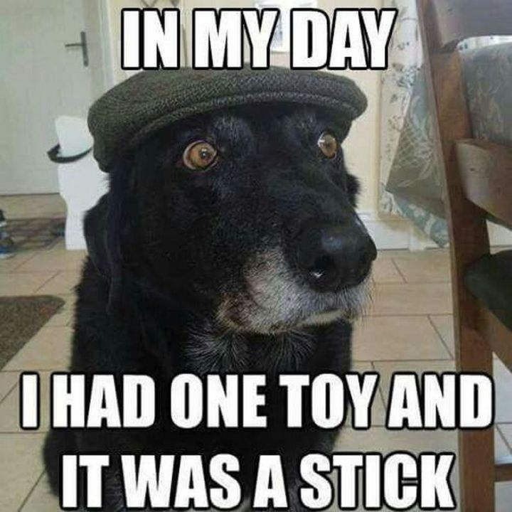 "101 best funny dog memes - ""In my day, I had one toy and it was a stick."""