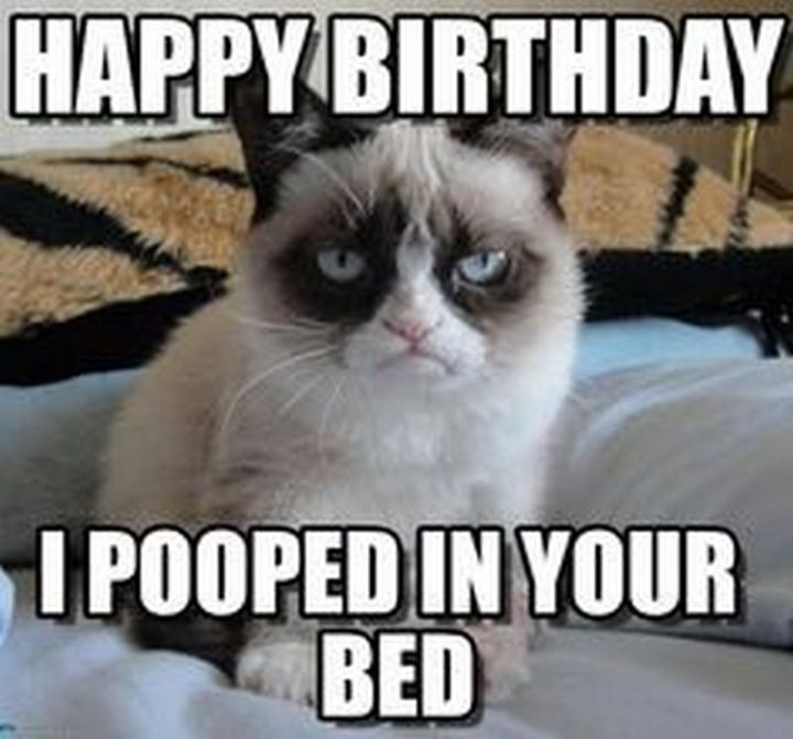 "101 Happy Birthday Memes - ""Happy Birthday. I pooped in your bed."""