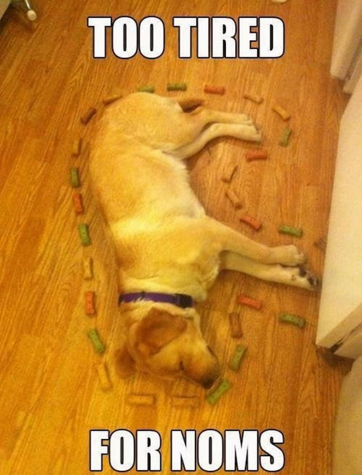"""37 Best Exhausted Memes - """"Too tiredfor noms."""""""