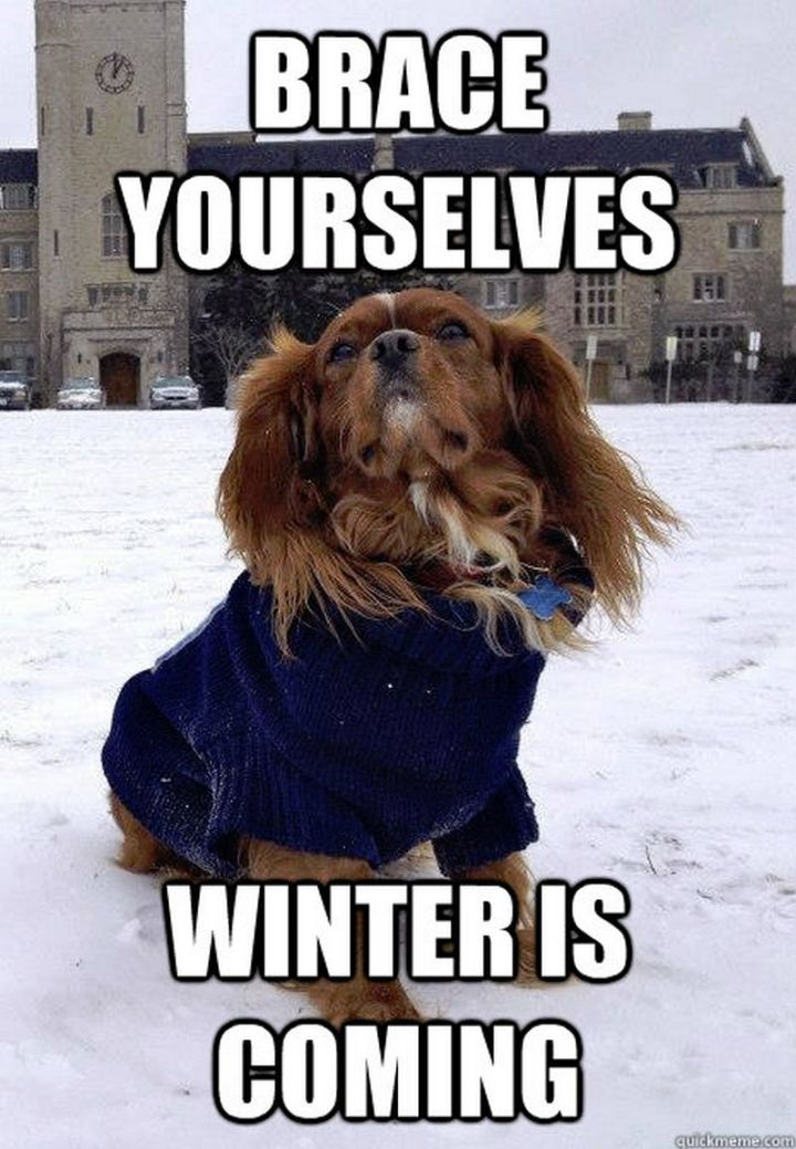 "55 Funny Winter Memes - ""Brace yourselves, winter is coming."""