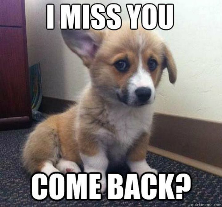 "101 I miss you memes - ""I miss you. Come back?"""