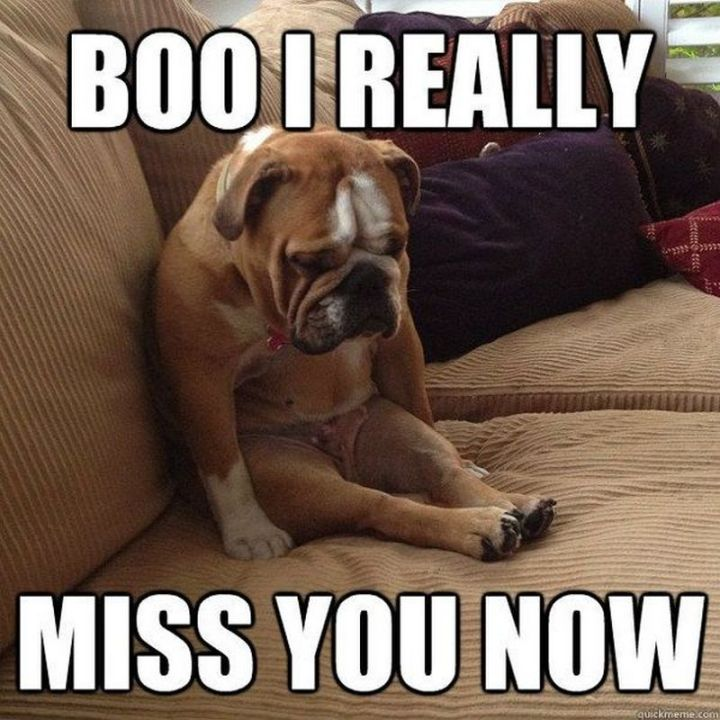 "101 I miss you memes - ""Boo, I really miss you now."""