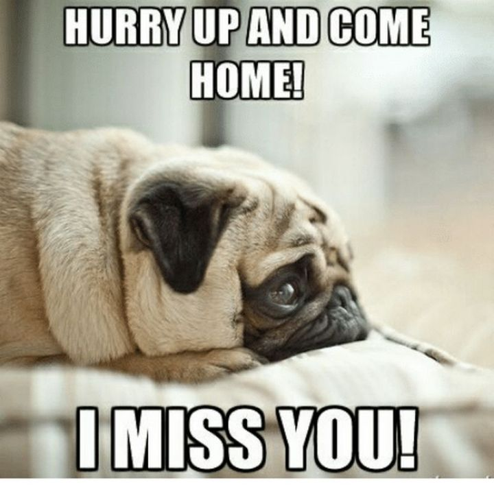"101 I miss you memes - ""Hurry up and come home! I miss you!"""