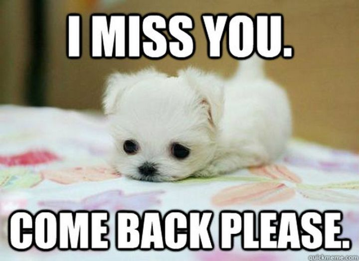 """101 I miss you memes - """"I miss you. Come back please."""""""