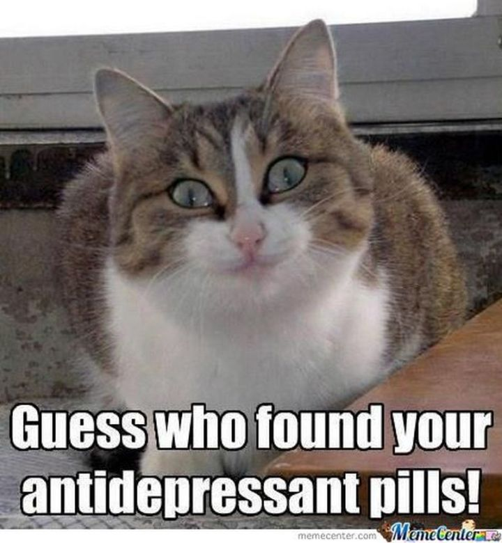 """101 Smile Memes - """"Guess who found your antidepressant pills!"""""""