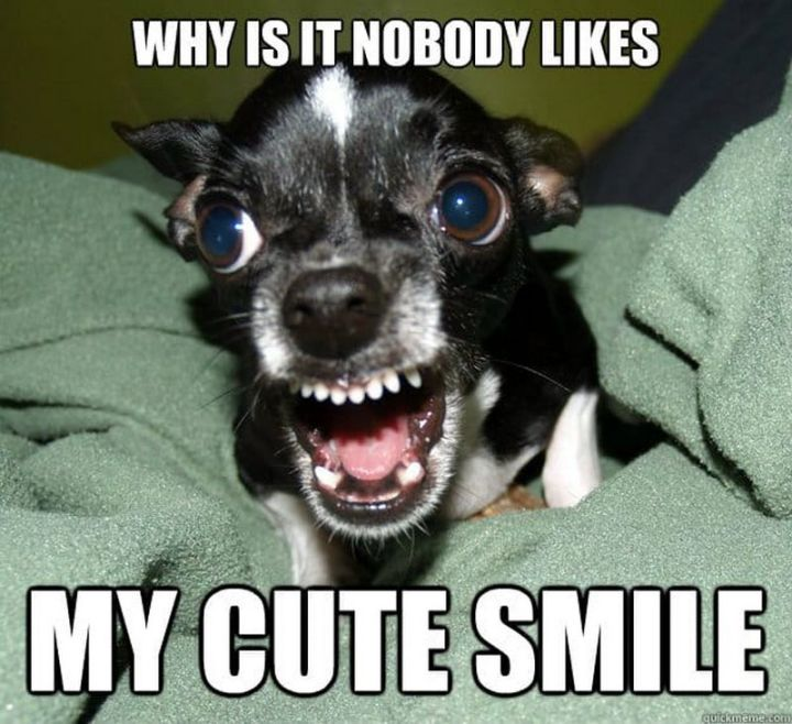 """101 Smile Memes - """"Why is it nobody likes my cute smile."""""""