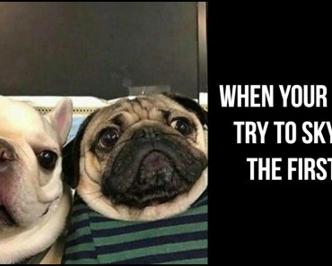 101 Lovable Pug Memes That Are Too Puggin' Cute.